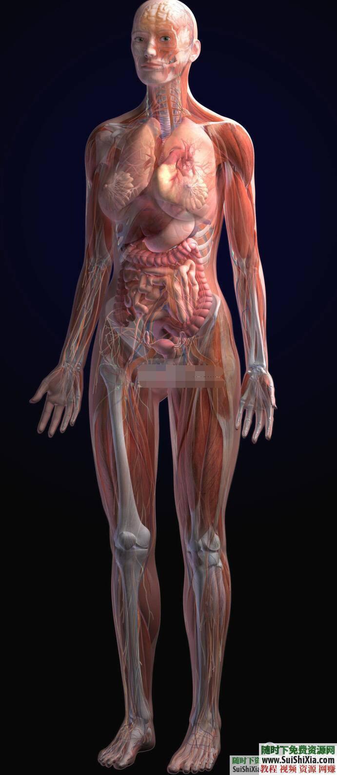 人體穴位拔罐養生書籍與經驗中醫知識  打包分享一些中醫知識人體穴位拔罐養生類電子書籍和經驗圖片給大家 第9張