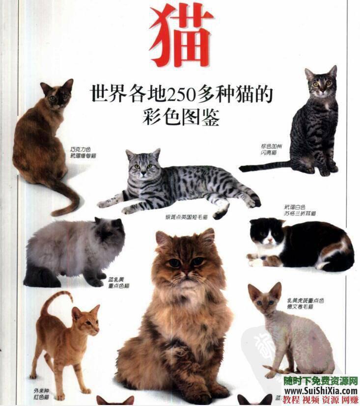 寵物貓飼養技術 養貓攻略+技巧教程+貓病經驗PDF書籍  養貓攻略技巧教程寵物貓飼養技術貓病經驗PDF書籍打包 第4張
