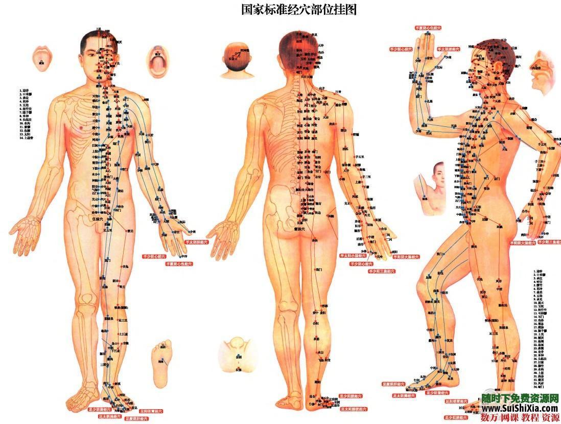 超高清版常用人體穴位經絡圖PDF 第4張