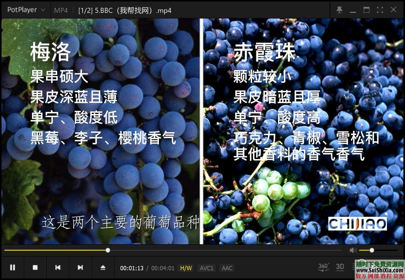 红酒品鉴视频教程和酒文化酒水知识资料 第6张